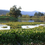 Humedales_de_Andalucia,_Valle_del_Cauca