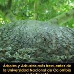 Guía árboles y arbustos más frecuentes, Universidad Nacional